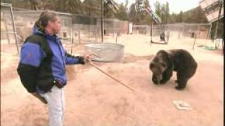 Grizzly Face to Face; Rocky the bear working again