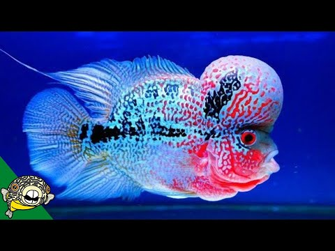40 Gallon Breeder Fish Tank Ideas