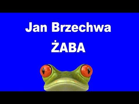 żaba Jan Brzechwa Bajki Mojego Dzieciństwa
