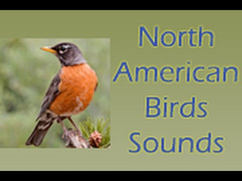North American Birds Sounds Android App