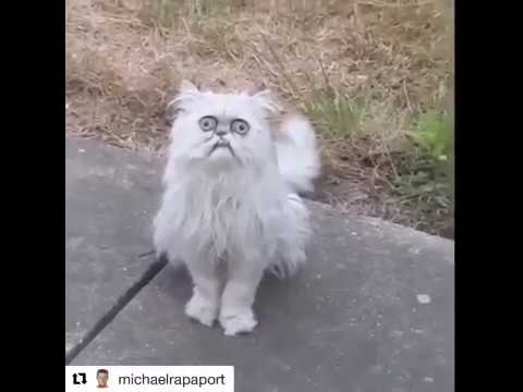 Michael Rapaport  This Stray Cat Looks Like Grandma