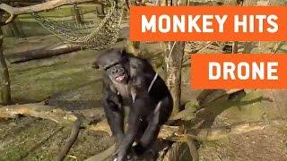 Chimp Destroys Drone | Planet of the Apes