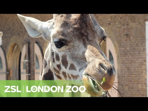 ZSL London Zoo - Regent's Park, London | Zoological Society of London