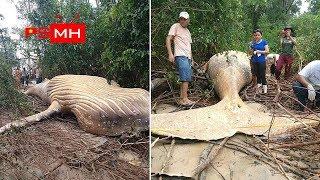 Những thứ kỳ lạ được tìm thấy ở trong rừng !!!