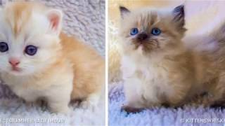 23Charming Animals Composed of100% Cuteness