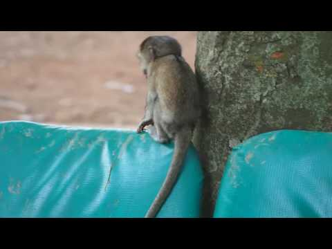 P1301656   Baby vervet aapje in Entebbe dierentuin