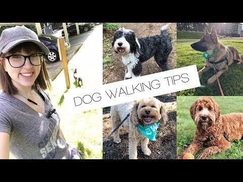 WAG! DOG WALKING: Tips & Tricks