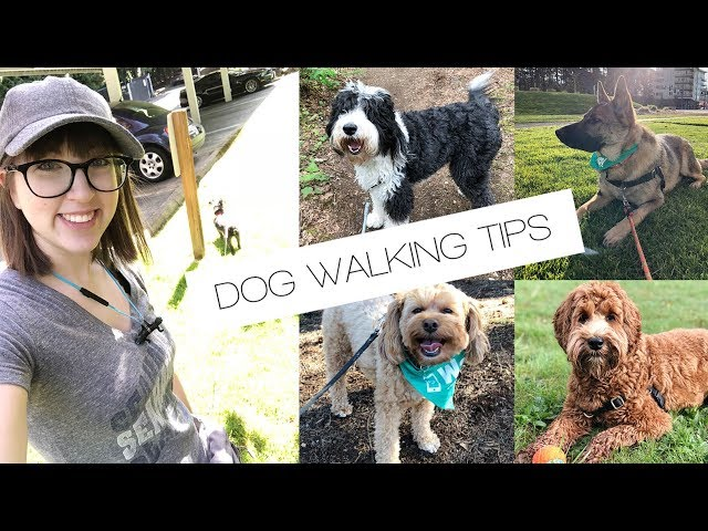 WAG! DOG WALKING: Tips & Tricks
