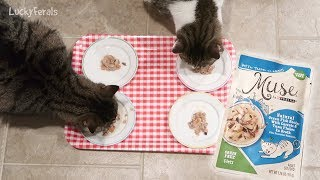 Cats Try Purina Muse Cat Food Review