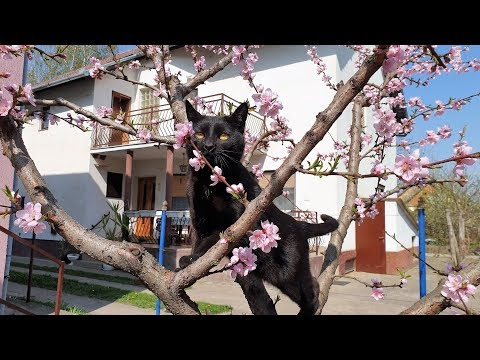 Relaxing Cat Video 40