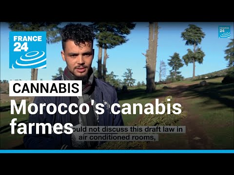 Morocco's cannabis farmers: 'Poor and living in fear'