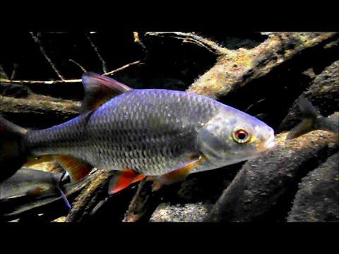 European Fish Tank