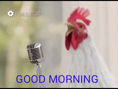 Chicken song  Good morning song by cook 2017