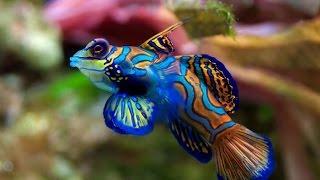 En Pahalı Akvaryum Balıkları