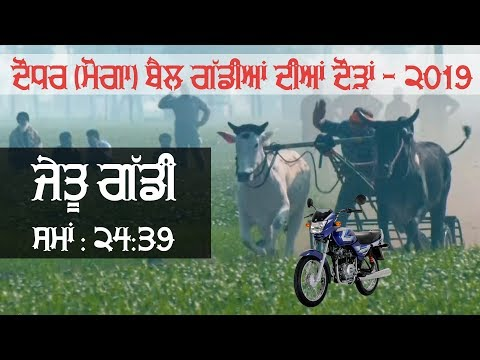 WINNER OXs PAIR || Time : 24.39 / 1100 Feet Distance || at DAUDHAR (Moga) OX RACES - 2019 | MALWA TV