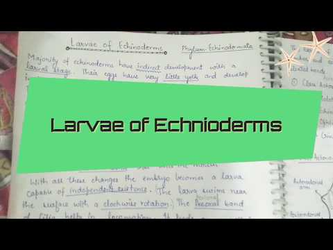 Larvae Of Echinoderms-part 1