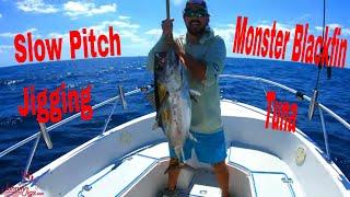 Catching Blackfin Tuna Slow Pitch Jigging Offshore fishing