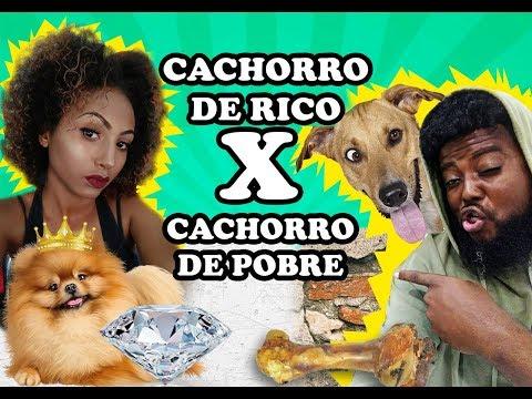 GATO CACHORRO E DANIEL GRÁTIS DOWNLOAD GODRI VIDEOS
