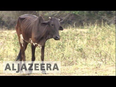 Kenya declares national disaster after severe drought