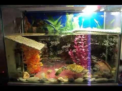 Красноухие черепахи относятся к водяным, содержать их нужно только в просторных акватеррариумах. Так, для одной черепахи нужен аквариум на 100-150 литров. В террариуме сделайте островок, где они могли бы отдохнуть и погулять. Наклонный берег островка должен быть достаточно грубым,