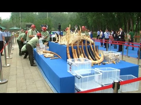 China Shuts Down One Third of Its Ivory Factories, Retail Stores