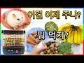 귀요미 햄스터를 위해 이정도 쯤이야ㅋㅋㅋ | 햄찌 건강식 수제 간식 먹이 만들기 | 말린과일 식품 건조기| 심심타임 | Hamaster dried food making