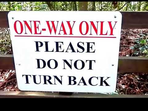 MacRitchie Nature Trail ( Tree Top Walk)我的电影
