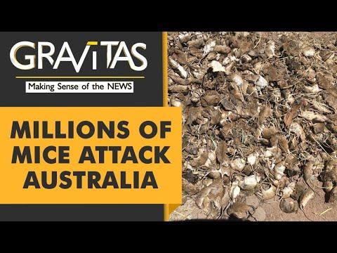 Gravitas: Mouse plague in Australia