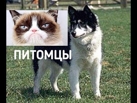 ТОП 5 ДОМАШНИХ ПИТОМЦЕВ/ выбери своего питомца :)