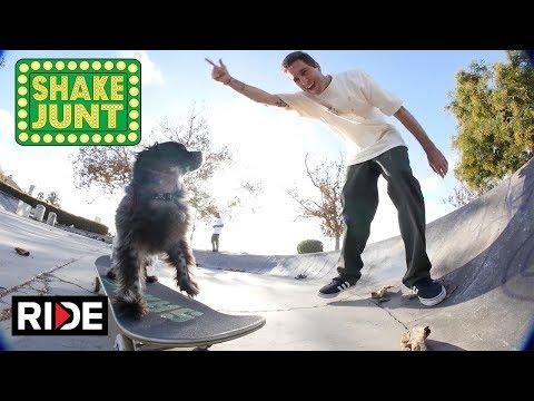 Beagle Ride or Die - Shake Junt