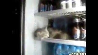 А кот сколько стоит?