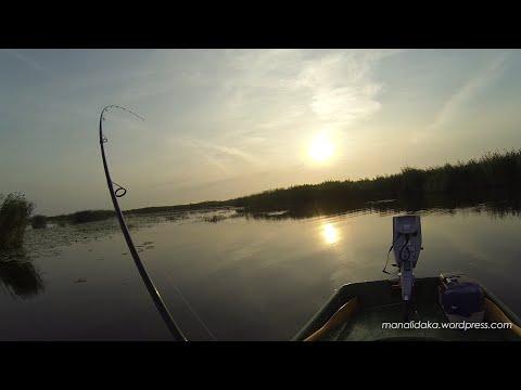 Līdaku cope vasaras vidū Babītes un Liepājas ezeros