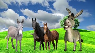 One Special Short Clip of Beautiful Donkeys Video By Only Animal (Part-6)