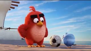 Angry Birds в кино!  - анонс на 31 канале