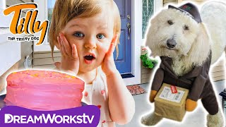 Delivery Dog Takes The Cake | TILLY THE TRICKY DOG
