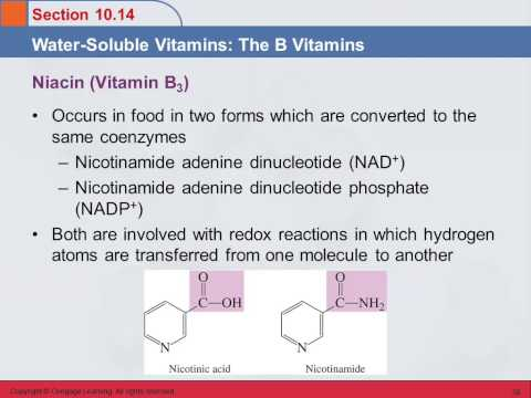 3B 10.14 Water-Soluble Vitamins: The B Vitamins