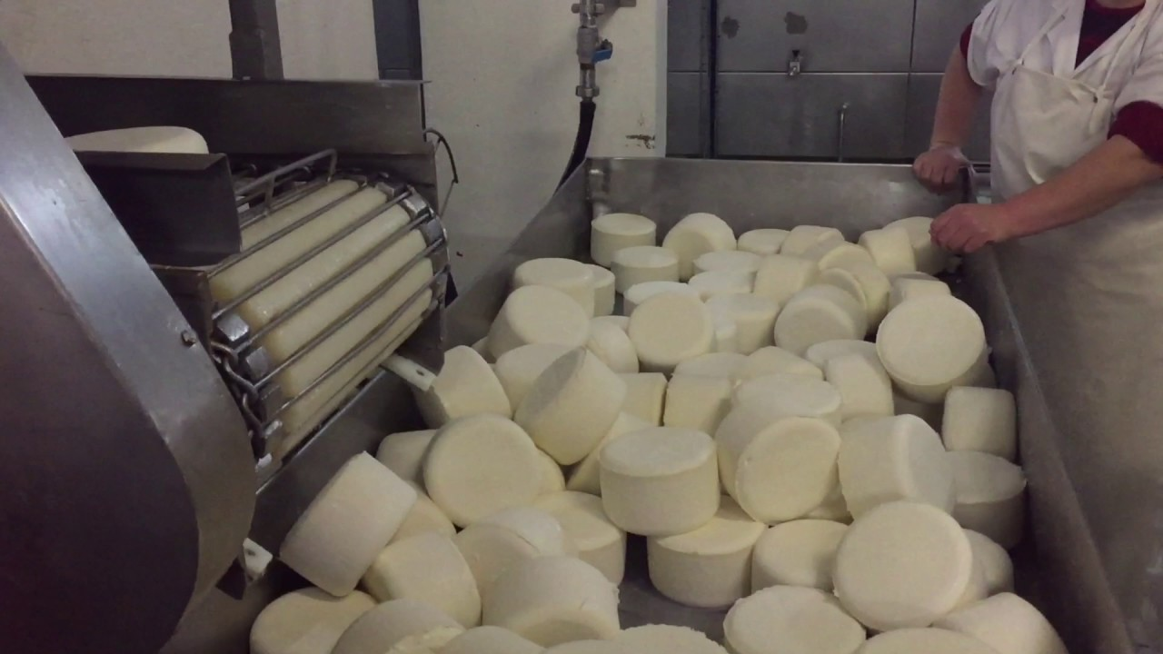 How To Produce The Portuguese Cheese