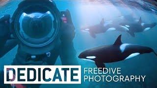 Meet the photographer that dives with orcas: Jacques de Vos. | Dedicate E1