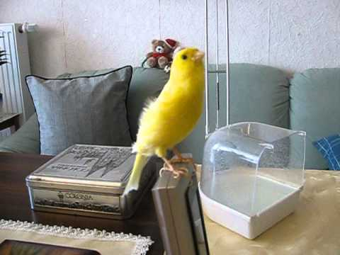 vogel mit rotem bauch buzzpls com. Black Bedroom Furniture Sets. Home Design Ideas