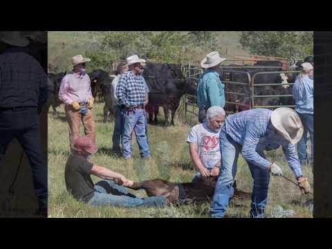 4S Livestock .... Branding is MT Favorite Pastime!
