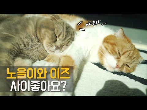 고양이 노을이와 이즈는 사이가 좋을까? -아빠와 아들-