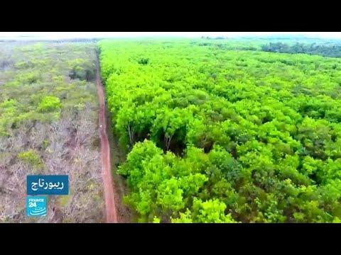 مزارع نخيل الزيت والموز تدفع ثمن الحرب الانفصالية بالكاميرون  - نشر قبل 9 دقيقة