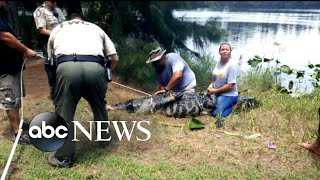 An Alligator Got This Lady': 911 Call Captures Moment Of Deadly Attack