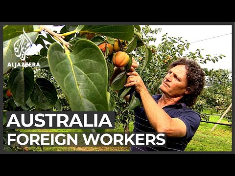 Australia Harvest: Fears Over Shortage Of Foreign Workers
