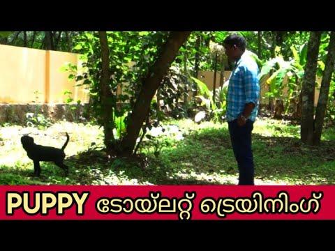dog training : ' toilet training'  Malayalam:kerala dog training : വളര്ത്തു നായയെ പരിശീലിപ്പിക്കാം