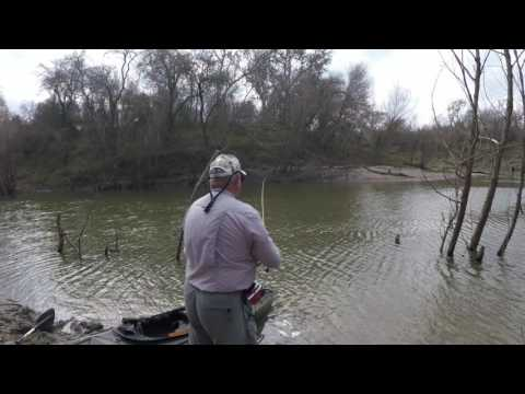 MAC Daddy Fishing teams up with Steve Cruz and Company  on the Nueces River in search of White Bass