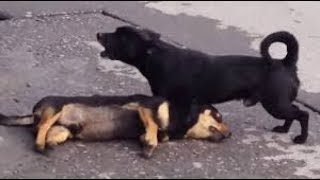 Animal road accidents.. Hit and run accident