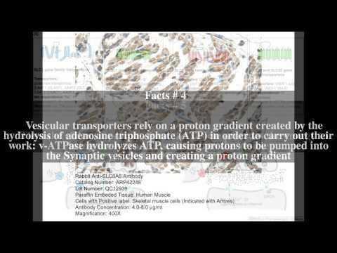 Neurotransmitter transporter Top # 10 Facts