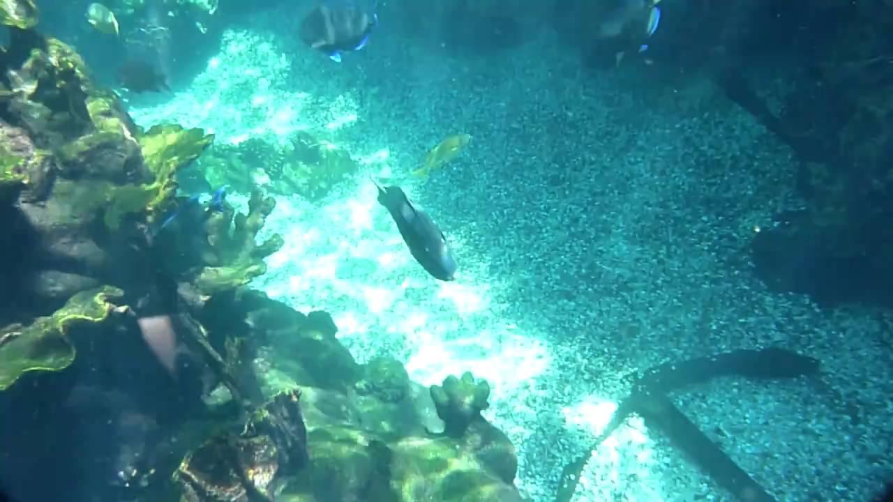 Fish tank kings a snorkelers dream - Swimming In The Fish Tank Typhoon Lagoon