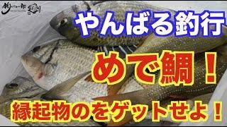 vol.265 めで鯛!魚を釣りに行こう! thumbnail